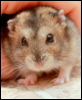 ernads: my alternative animal (hamster)