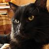 iolf: (бестер кот)