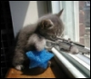 oncejadedtwicesnarked: A kitteh aims a gun out of the window (Angry kitteh)