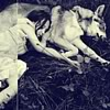 "evewithanapple: a young girl sleeping beside a wolf | <lj user=""panoramae""</lj> (etc 
