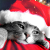 denyce: (Stock: Xmas kitty)