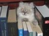 tyoma_cat: (Default)