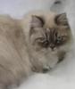 tyoma_cat: (Снежный кот)
