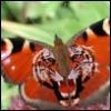 ladwiga: (бабочка)
