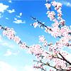 godsoffortune: (sakura)