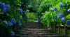 trinaward1: (Hydrangea Way)