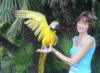 307elena: (попугай)