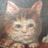 sushicat: (cat foosh)