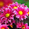 taketimetoshine: (Pink Flowers)
